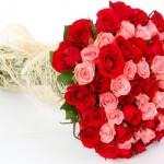 Sepa que flores regalar en San Valentín